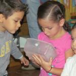 estimulando la Curiosidad sistema Montessori